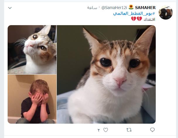 يوم القطط العالمى (5)