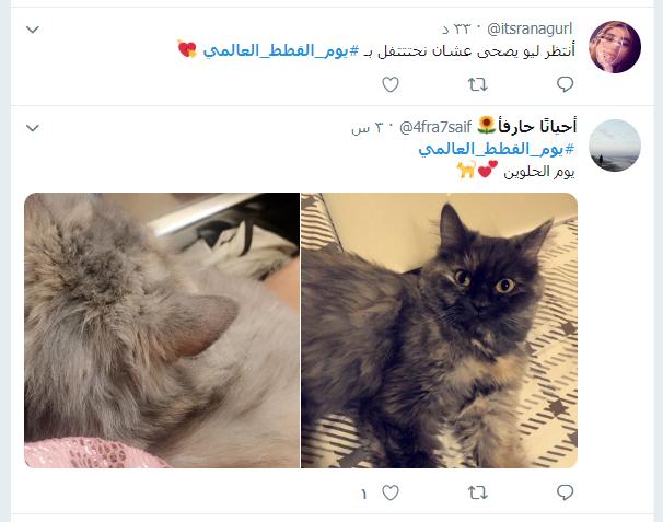 يوم القطط العالمى (16)