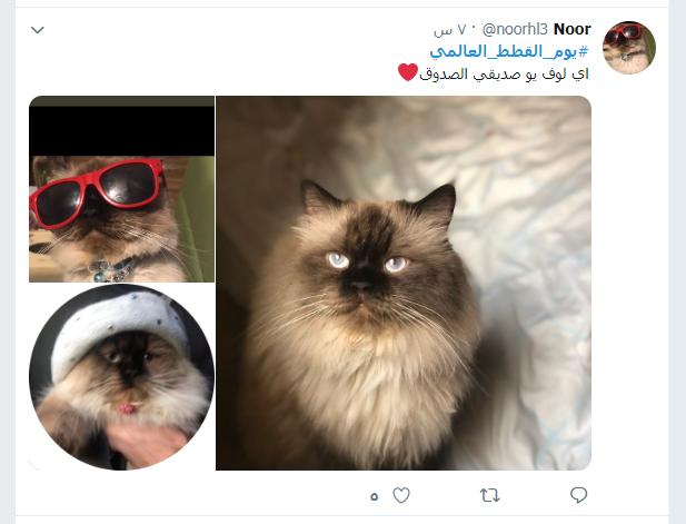 يوم القطط العالمى (2)