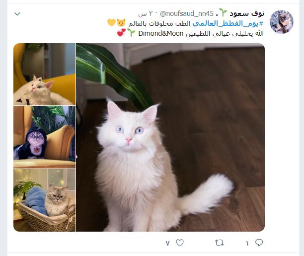 يوم القطط العالمى (8)