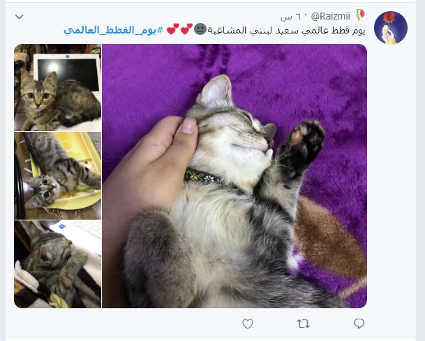 يوم القطط العالمى (13)