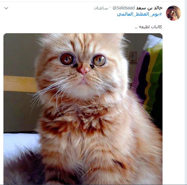 يوم القطط العالمى (15)
