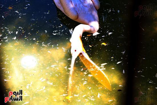 بحيرة البجع بحديقة حيوان الجيزة