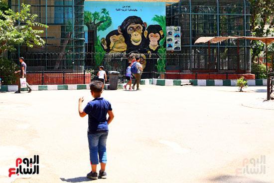 ايواء الشمبانزى   بحديقة الجيزة