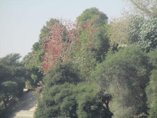 الحديقة-النباتية--(6)