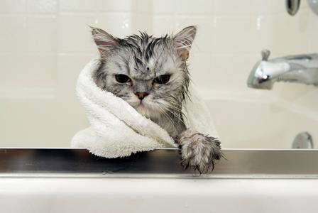الحفاظ على ترطيب القطة