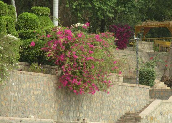 الحديقة-النباتية--(3)