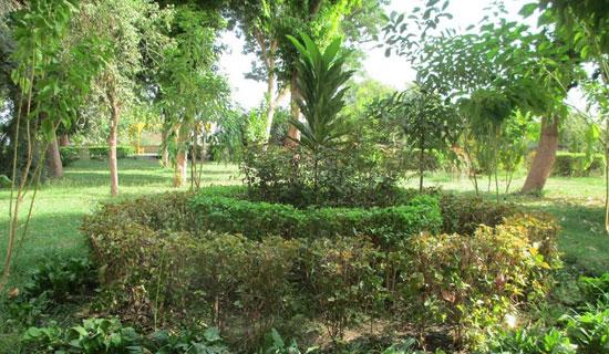 الحديقة-النباتية--(1)