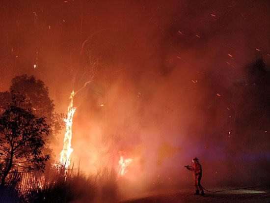 النيران تلتهم الأشجار