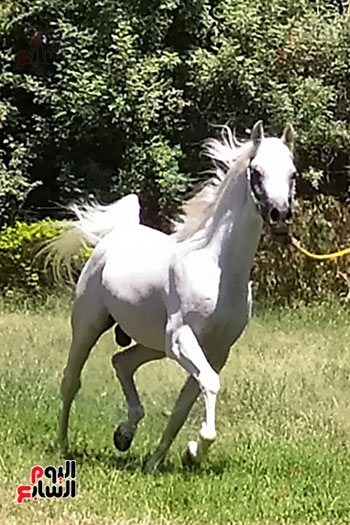 الخيول--بمحطة-الزهراء--(3)