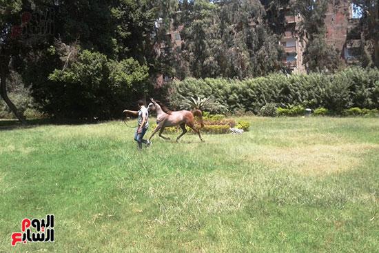 الخيول--بمحطة-الزهراء--(2)