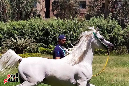 الخيول--بمحطة-الزهراء--(1)