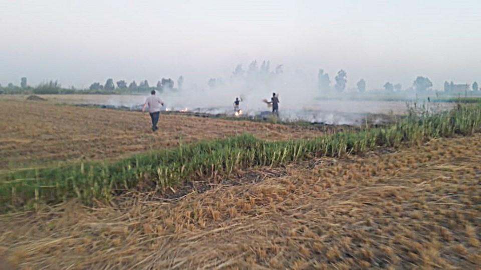 حرق قش الأرز بكفر الشيخ (3)