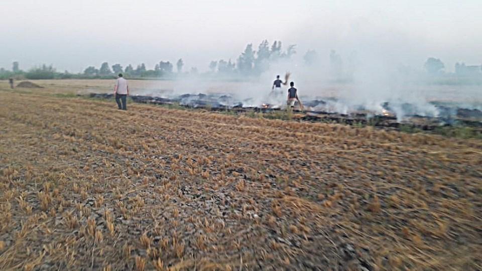 حرق قش الأرز بكفر الشيخ (4)