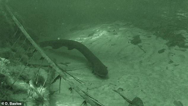 ثعبان البحر 3