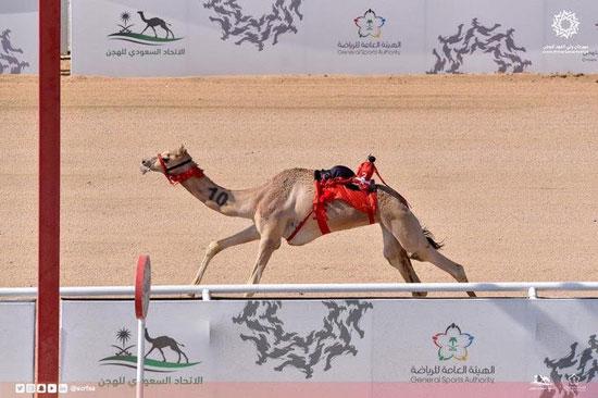 الهجن-الإمارتية-تحقق-الفوز-بأشواط-المساء-فى-سباق-الهجن-بالسعودية-(5)