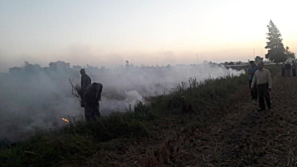 حرق قش الأرز بكفر الشيخ (2)