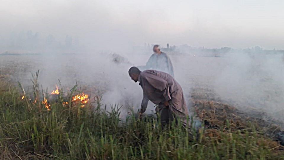 حرق قش الأرز بكفر الشيخ (5)