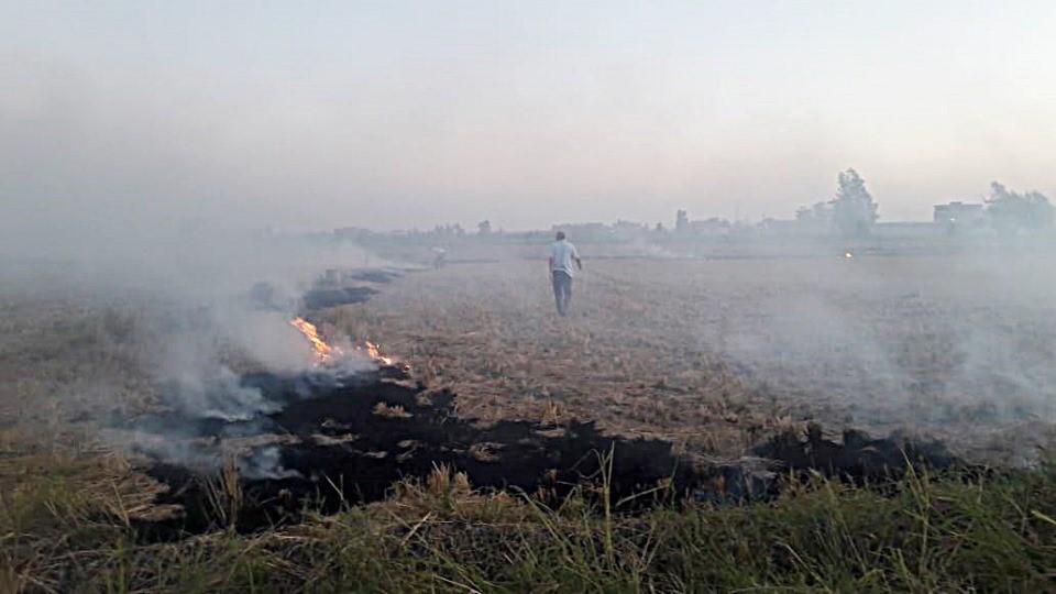 حرق قش الأرز بكفر الشيخ (6)