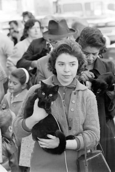 اختبارات 152قطة للمشاركة في فيلم Tales of Terror عام 1962 (7)
