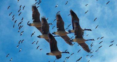 طيور -أرشيفية