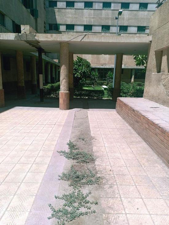 طوارئ بالمدن الجامعية بجامعة عين شمس (6)