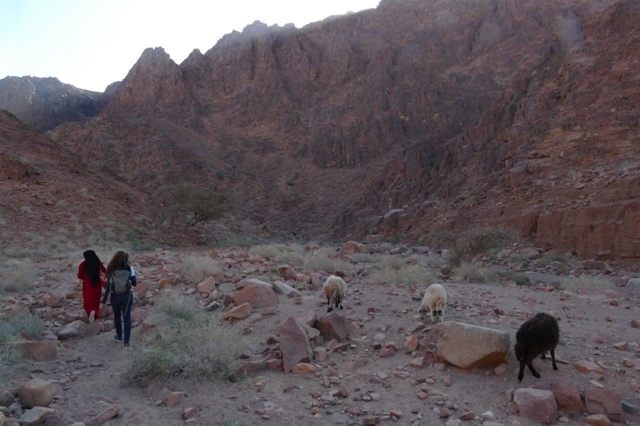 درب سيناء أول طريق للمشى الطويل