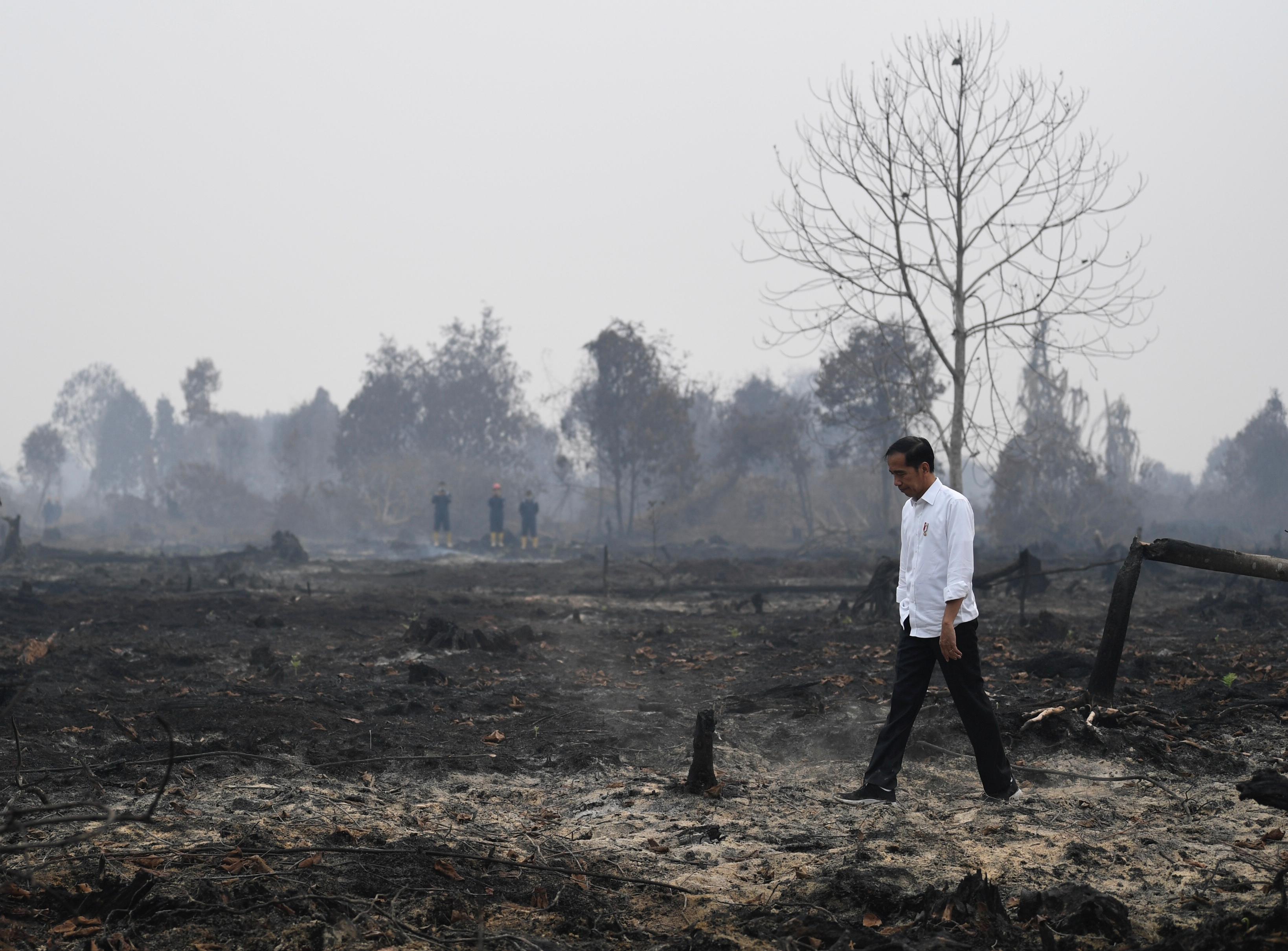 الرئيس يزور منطقة الحرائق