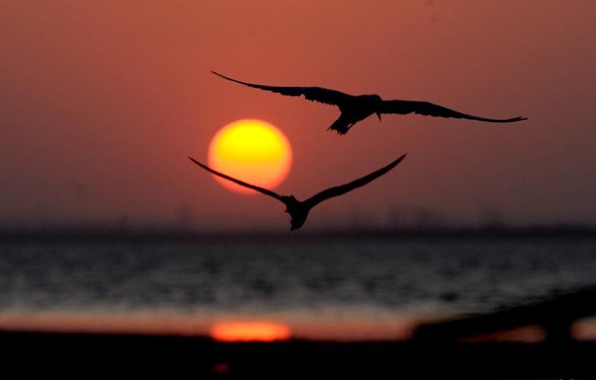 مشهد الطيور فى لحظة الغروب