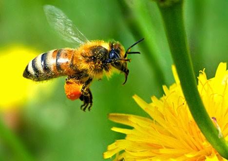 النحل (4)