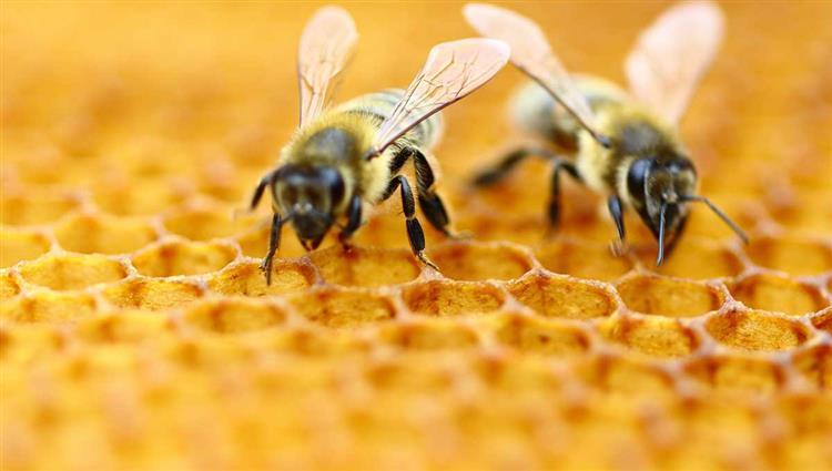 النحل (2)