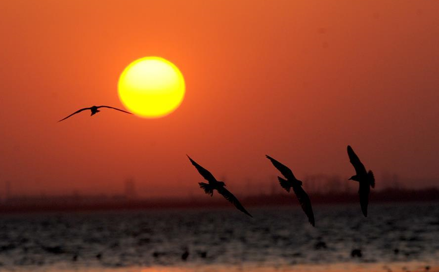 لقطة مميزة للطيو لحظة غروب الشمس