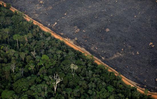 تدمير مئات الهكتارات من الأراضى الزراعية