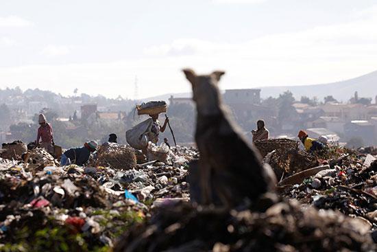 الحيوانات تتواجد فى المناطق التى مازالت تتواجد بها القمامة