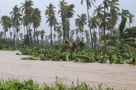 مزارع-الموز-أحد-أهم-مصادر-الدخل-للمواطنين