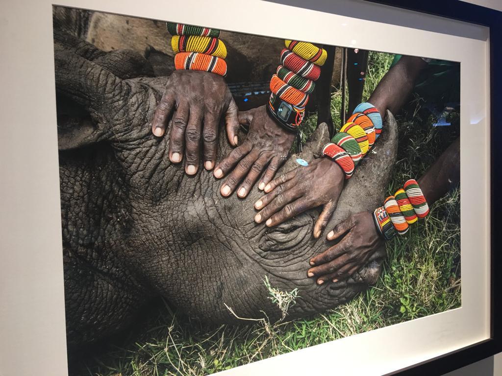 صور توثق اللحظات الأخيرة فى حياة سودان (2)