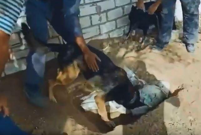 الكلاب البوليسية تستخرج المخدرات