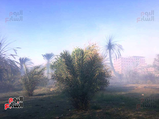 حريق-هائل-في-مزارع-نخيل-بقرية-القصر-بالوادي-الجديد-(5)