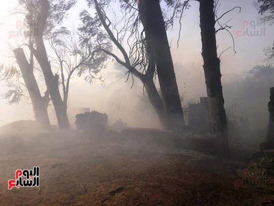 حريق-هائل-في-مزارع-نخيل-بقرية-القصر-بالوادي-الجديد-(23)