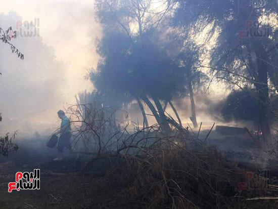حريق-هائل-في-مزارع-نخيل-بقرية-القصر-بالوادي-الجديد-(11)