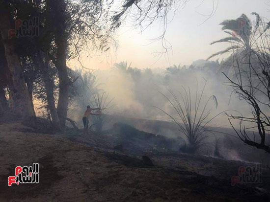 حريق-هائل-في-مزارع-نخيل-بقرية-القصر-بالوادي-الجديد-(21)
