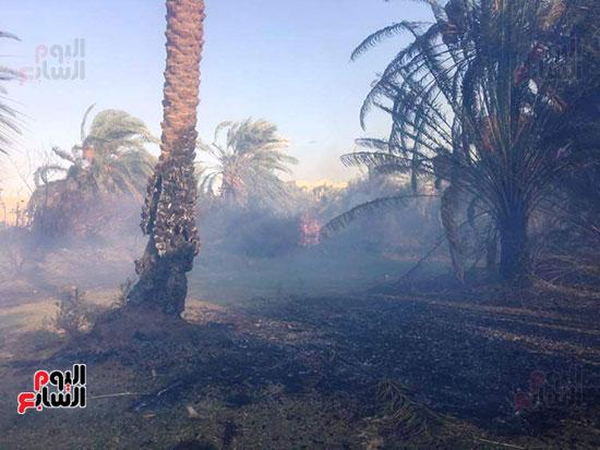 حريق-هائل-في-مزارع-نخيل-بقرية-القصر-بالوادي-الجديد-(4)
