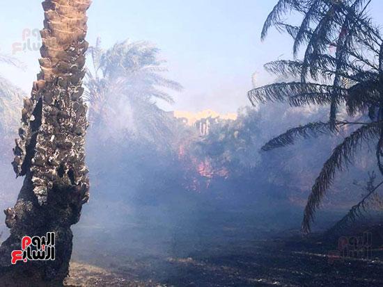 حريق-هائل-في-مزارع-نخيل-بقرية-القصر-بالوادي-الجديد-(7)