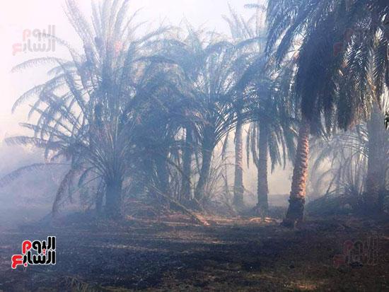 حريق-هائل-في-مزارع-نخيل-بقرية-القصر-بالوادي-الجديد-(8)