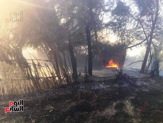 حريق-هائل-في-مزارع-نخيل-بقرية-القصر-بالوادي-الجديد-(2)