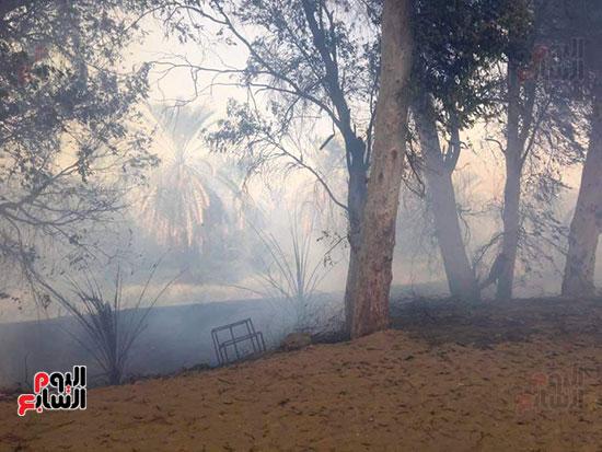 حريق-هائل-في-مزارع-نخيل-بقرية-القصر-بالوادي-الجديد-(18)