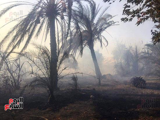 حريق-هائل-في-مزارع-نخيل-بقرية-القصر-بالوادي-الجديد-(6)