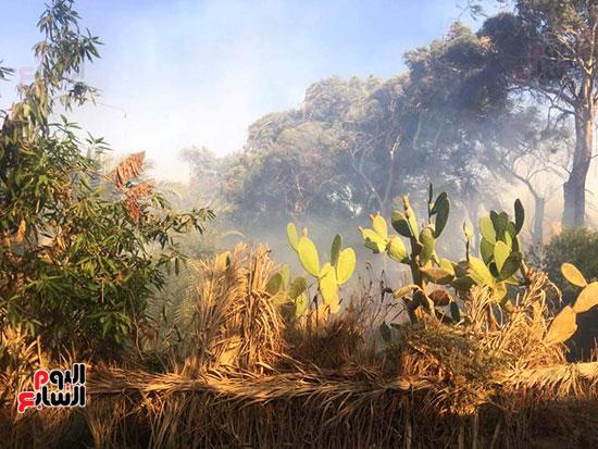 حريق-هائل-في-مزارع-نخيل-بقرية-القصر-بالوادي-الجديد-(13)