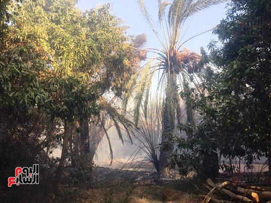 حريق-هائل-في-مزارع-نخيل-بقرية-القصر-بالوادي-الجديد-(1)