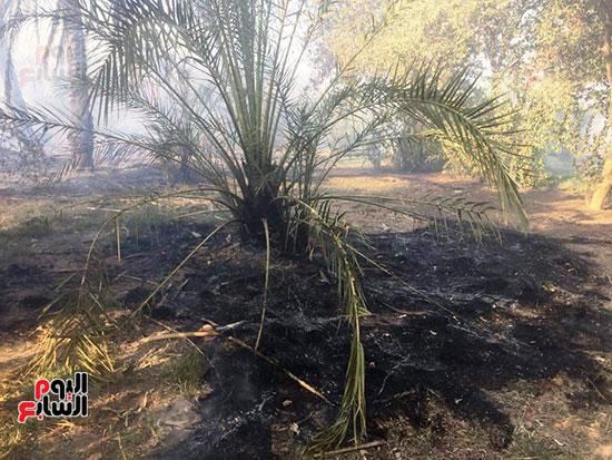 حريق-هائل-في-مزارع-نخيل-بقرية-القصر-بالوادي-الجديد-(3)